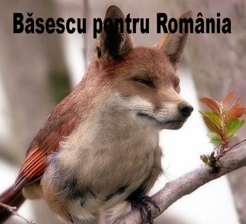 basescu pt romania